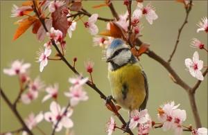 EkoMozaik-Spring